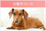 小型犬コース