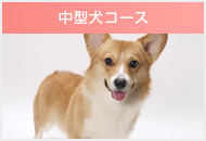 中型犬コース